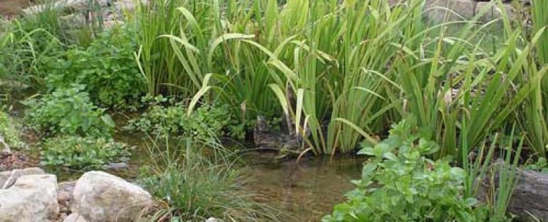 The Benefits of Bog Filtration