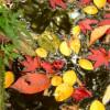 5 Fall Pond Tips