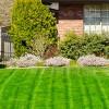 Starting and Maintaining Winter Ryegrass