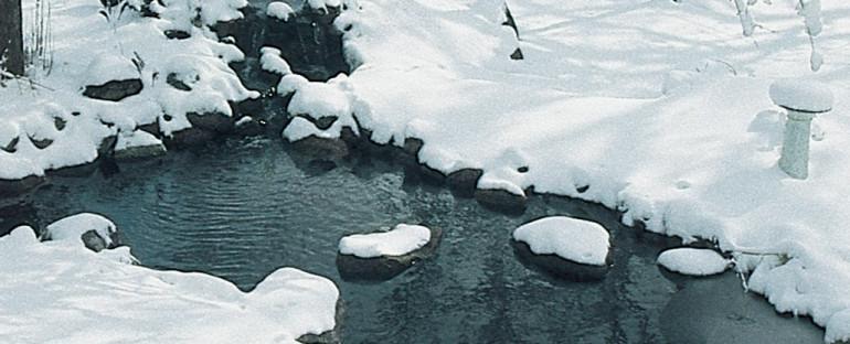 The Christmas Pond