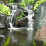 Water Gardens (4)