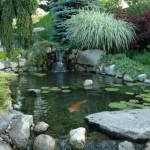 Water Gardens (6)