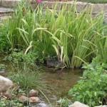 Bog-Garden