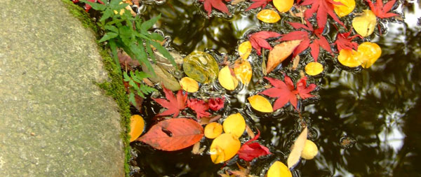 Fall pond cleaning tips buck 39 s landscape material for Koi pond maintenance tips